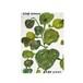 アートカード Plants