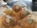 @4種のパン詰合せセット