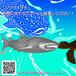 「ジンベイザメ」3Dプリント用データ