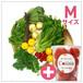 朝採れ野菜(M)10~12種類のお野菜セット +ブランドトマトcoiina