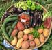季美の森野菜セット 100サイズ/ Seasonal Kimi-no-mori vegetable set 100size