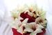 12月限定商品 アマリリスとポインセチアのブーケ(花束)