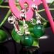 天然石 イヤリング グリーンメノウ 緑瑪瑙 6mm