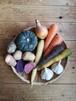秋のお野菜セット 2019「まいにちの暮らしにオーガニック」