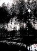 (原画)Tree VII-Bamboo
