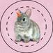【雑貨】缶バッジ:ユニピョーン(兎に角:つのうさぎ)