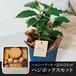 【父の日限定】コーヒーの木+ベジボックス