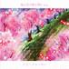 ミス・ジョーカー / 桜の花が散る頃に