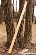(初心者向け)DM008 ディジュリドゥ(木の種類:ビーチのディジュリドゥ / Eb )