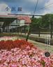 小浜線5号