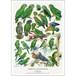 アート ポスター A4 サイズ KOUSTRUP & CO. - Green parrots 緑のオウム