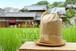 関東九州の方向け【鵄印米 5kg×6回分セット 6回送料込み】とびじるしまい: 白米 /29年産ヒノヒカリ