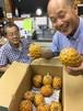 沖縄産パイナップル17kg