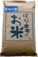 愛知県産 白米(大地の風)5kg×2袋【はっぴー米】