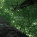 2nd ALBUM「自然ノオト-Nature Notes-」
