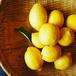 【今季初】瀬戸田の無農薬青レモン 1kg