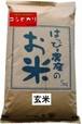 愛知県産 玄米(コシヒカリ)5kg【はっぴー米】