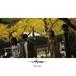 【WALTZMORE】1st Mini Album Reunion
