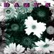 Dazy's / Dazy's
