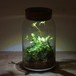 bottle terrarium 75