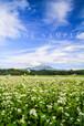 蕎麦畑と大山