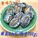 活蝦夷あわび(9~11個)総量約700g