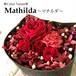 ねこばこ Mathilda マチルダ オリジナル猫型フラワーボックス プリザーブドフラワー
