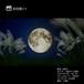 お月見11