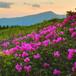 Mountain Flowers Honey大