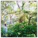 重松壮一郎と生命の森展 Recordings