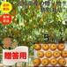 【送料無料】【宮城県産】【贈答品】【予約販売】産地直送 ブランド和梨「豊水」5kg/箱