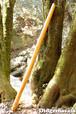 USED扱いDM012 ディジュリドゥ(木の種類:ブラックチェリーのディジュリドゥ / C )