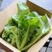 三池高菜 1.0kg