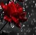 BLESS THIS MESS / XIALL RAIN
