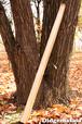 --SALE--(初心者向け)DM005 ディジュリドゥ(木の種類:杉のディジュリドゥ / Eb )