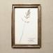植物標本 ドイツアンティーク1908 17APR-ASHF10