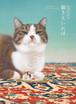 """陳珮怡作品集 猫さえいれば Chen Pei Yi's Art Book """"All I Need is My Cats"""" 2018"""