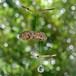 流木とサンキャッチャ-のモビールー4
