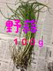 【稀少】古事記・万葉集にも記述されている天然野草「野蒜」のびる100g★オーガニック 3/15~5/10