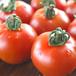 上北さんが作ったトマト鍋のトマト