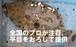 獲れたて鮮度の平目を、お刺身用に下ろしてお届け。日本の料理人に「最高」と賞賛される気仙沼の端麗な旨味、トロリとした縁側が絶品!