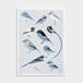 Riso print / BLUE - TORI - 47都道府県鳥 NEWS