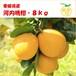 河内晩柑(宇和ゴールド)・8kg