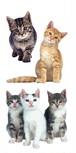 Playful Kitties / PH