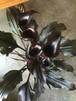 カラー5寸鉢「メモリーズ」ブラック