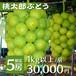 【完売御礼!】桃太郎ぶどう 1kg以上/房