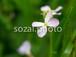 写真素材(花-4026038)
