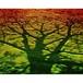 神秘の森・08(生命力の樹) A4
