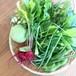 Vegeta屋お試し野菜Sセット(春・夏)