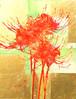 曼殊沙華 (Spider Lily)  (Limited Edition)